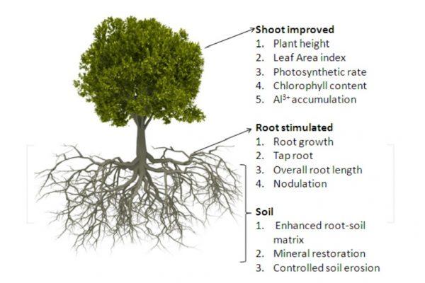 erasion control using vegatation 1